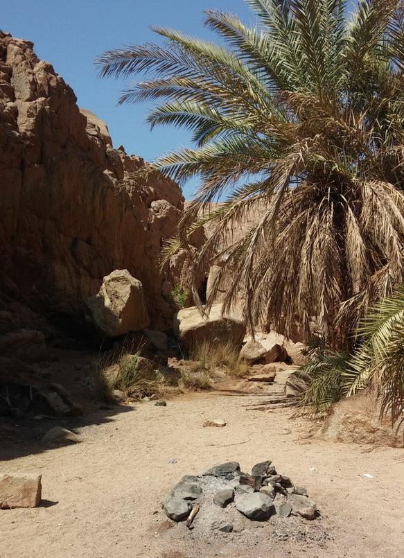 Название: Оазис в Пустыне Египта.jpg Просмотров: 107  Размер: 216.9 Кб
