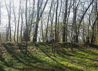 Нажмите на изображение для увеличения Название: весенний лес.jpg Просмотров: 206 Размер:96.7 Кб ID:1729