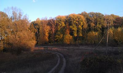 Нажмите на изображение для увеличения Название: Кицканский лес.jpg Просмотров: 1201 Размер:95.7 Кб ID:924