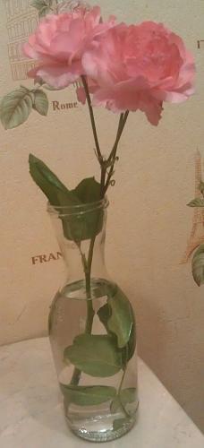 Нажмите на изображение для увеличения Название: Роза в бутылке.jpg Просмотров: 484 Размер:90.5 Кб ID:2612