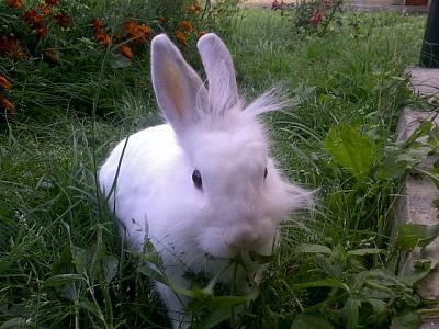 Нажмите на изображение для увеличения Название: Заяц в огороде.jpeg Просмотров: 387 Размер:78.1 Кб ID:1793