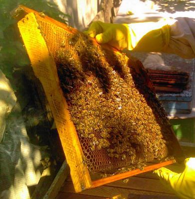 Нажмите на изображение для увеличения Название: Соты пчелинные.jpg Просмотров: 124 Размер:43.2 Кб ID:1808