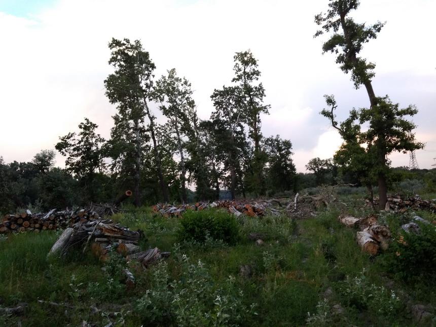 Название: Вырубка деревьев Кицканы.jpg Просмотров: 167  Размер: 186.7 Кб