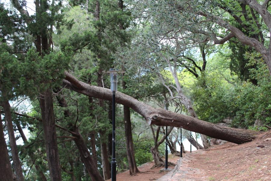 Название: нагнутое дерево.JPG Просмотров: 21  Размер: 285.5 Кб